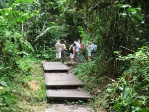 Wilde Touristen im Dschungel