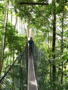 Auf dem Canopy Walk