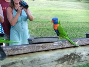 Papagei auf Molle Island