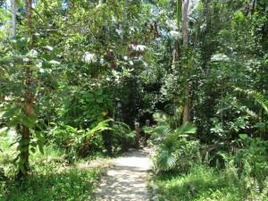Weg ins Buschcamp