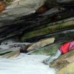 Robben schlafen